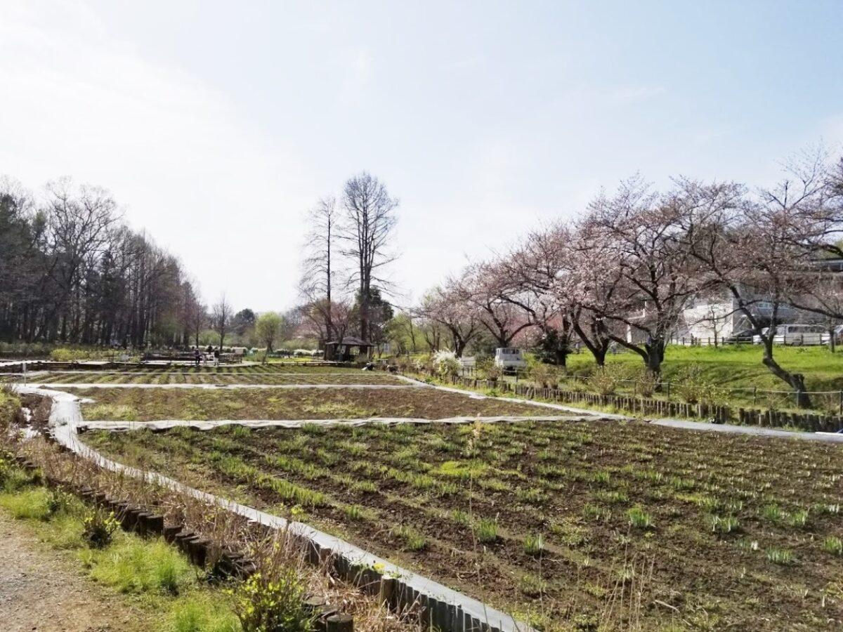 丸山公園直売所(上尾市)