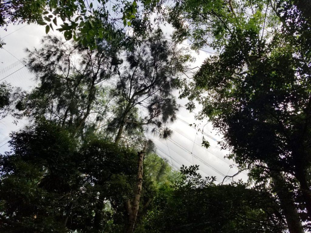 キャンベルタウン野鳥の森で体験できること