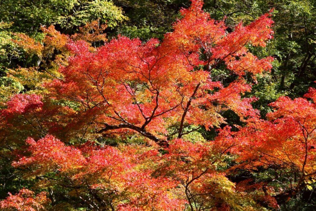 奥秩父の大滝・中津峡の紅葉の景色
